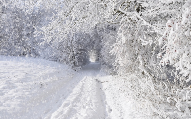nature_landscapes_winter_snow_snowing_snowflake_snowfall_roads_trees_forest_storm_blizzard_white_seasons_tunnel_1920x1200